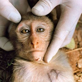 Iran to Try Launching Monkey into Space Again: Report