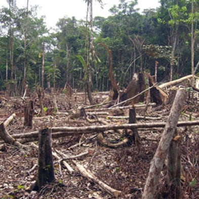 Cutting down rainforests also cuts down on rainfall for Why is wood sustainable