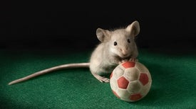 Fight-or-Flight Nerves Make Mice Go Gray