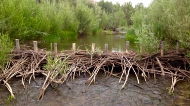 Beaver Dams Strengthened By Humans Help Fish Rebound