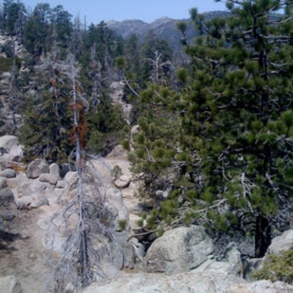 Trees Pull Nitrogen from Rocks and Microbes