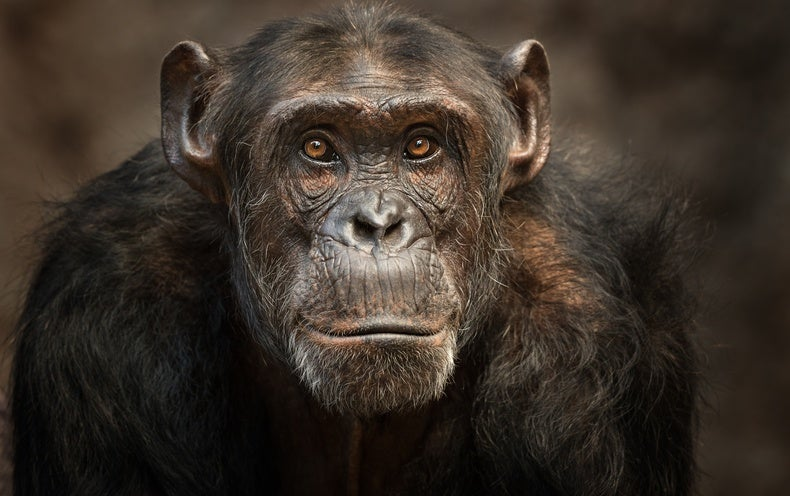Drenchable Drones, Prickly Cells and Face-Tracked Chimps: Science GIFs to Start Your Week