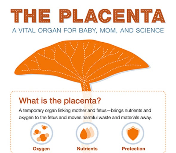 Placenta Research Attracts $41.5 Million in Federal Funding