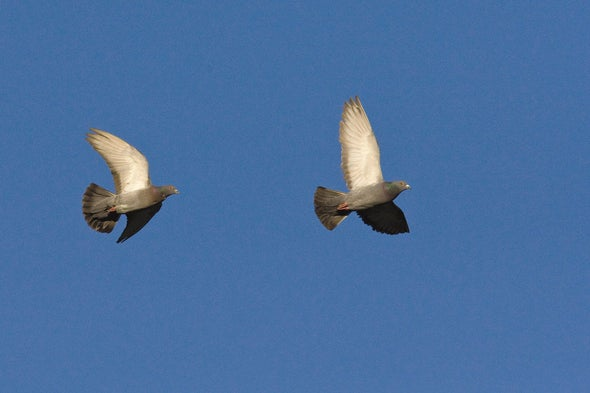 Birds of a Feather Flap Faster to Stay Together