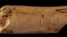 How Did Neanderthals and Other Ancient Humans Learn to Count?