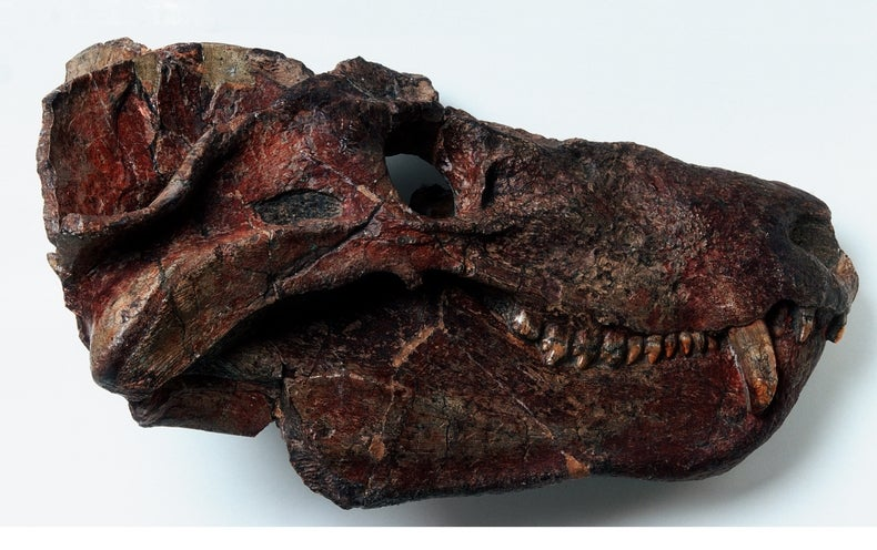 Meet the Ancient Reptile that Gave Rise to Mammals