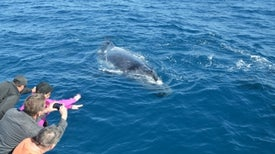 Whale-Watching Found to Stress Out Whales
