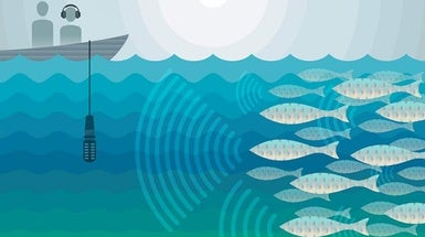 This Fish Emits Damaging Decibels