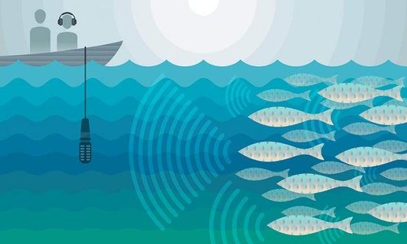 This Fish Emits Damaging Decibels
