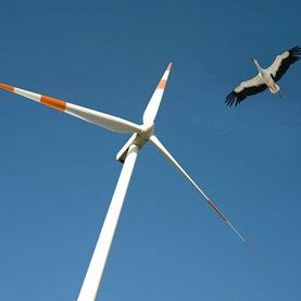 wind turbines, birds,