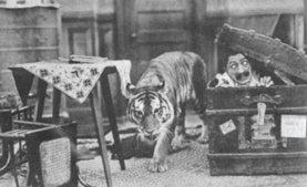 tiger scene