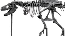 Blood from Stone: How Fossils Can Preserve Soft Tissue