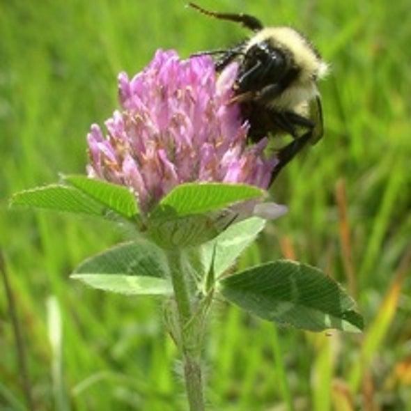 """Spring Creep"" Favors Invasive Species"