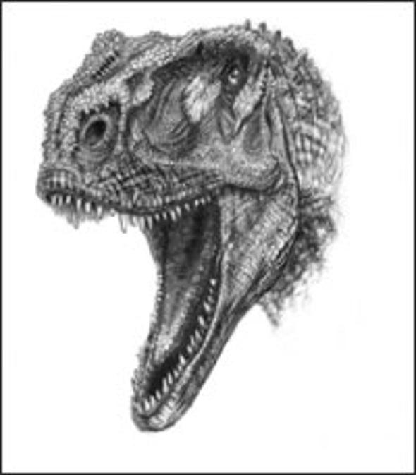 Dinosaur Discoveries Help Clock Continental Drift