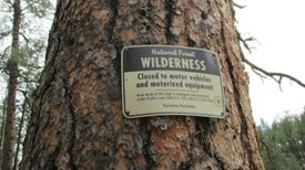 Can Wolves Bring Back Wilderness? [Excerpt]