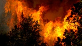 Fire Proves an Agent of Change for Western Landscapes