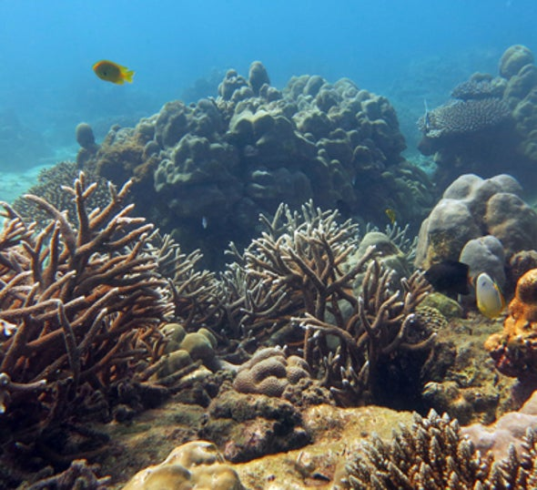 Coral Reefs Show Remarkable Ability to Recover from Near Death