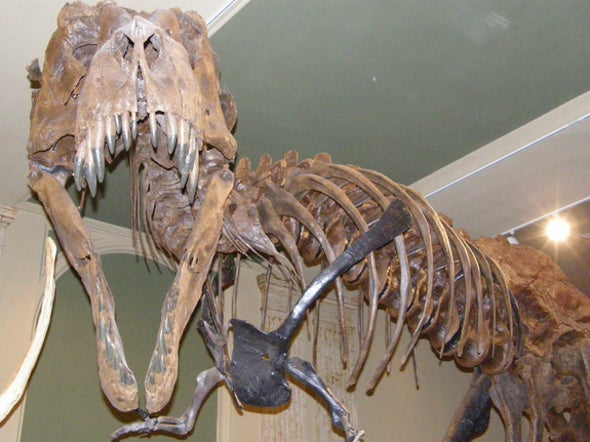 <i>T. rex</i> Was Likely an Invasive Species