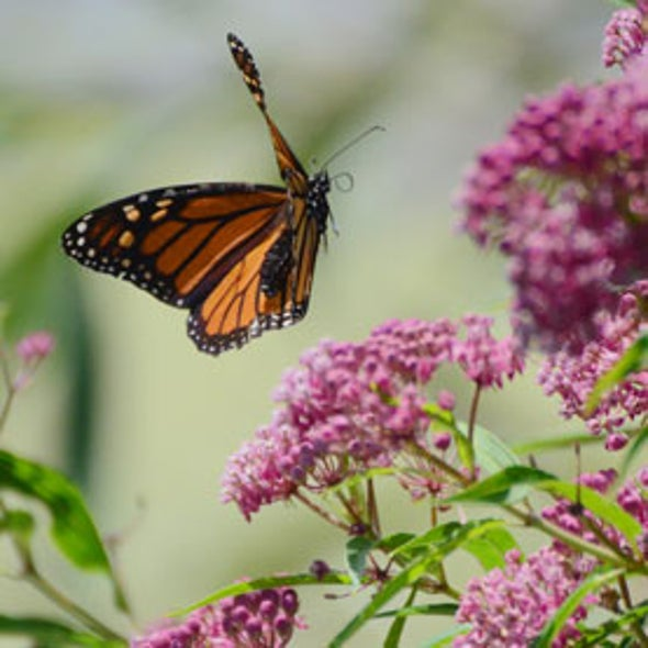 The Mathematical Butterfly: Simulations Provide New Insights on Flight