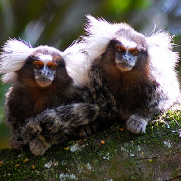 Precision Gene Editing Paves Way for Transgenic Monkeys