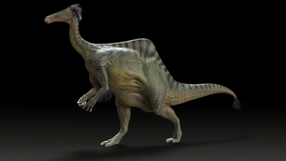 "Fossils Reveal ""Beer-Bellied"" Dinosaur [Video]"