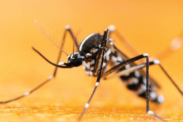 Low-Income Baltimore Blocks Host Bigger, More Dangerous Mosquitoes