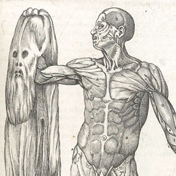 Anatomy Lessons Through The Ages Scientific American