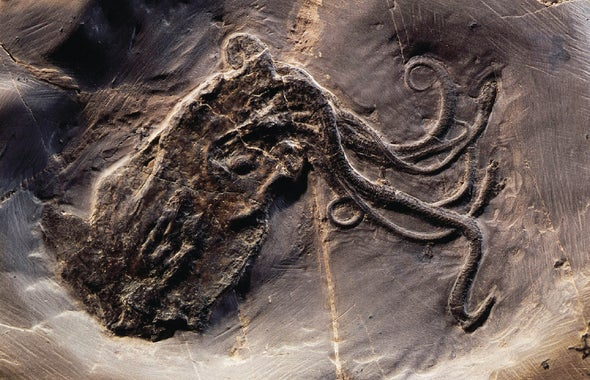 See the Best Fossil Octopus Ever Found