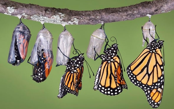 Planting Milkweed for Monarchs? Make Sure It's Native