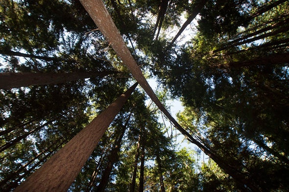 Does Being around Trees Help People Feel Good?