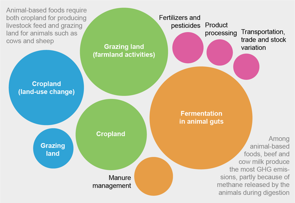 Here's How Much Food Contributes to Climate Change