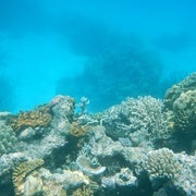 Biggest-Ever Coral Die-Off Reported on Australia's Great Barrier Reef