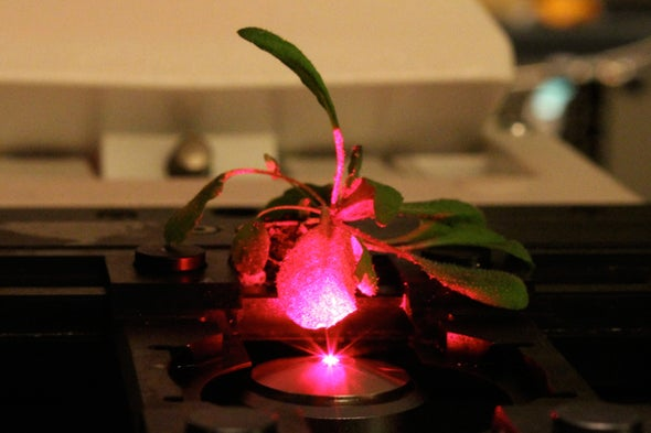 Bionic Plants Offer Superpowered Photosynthesis