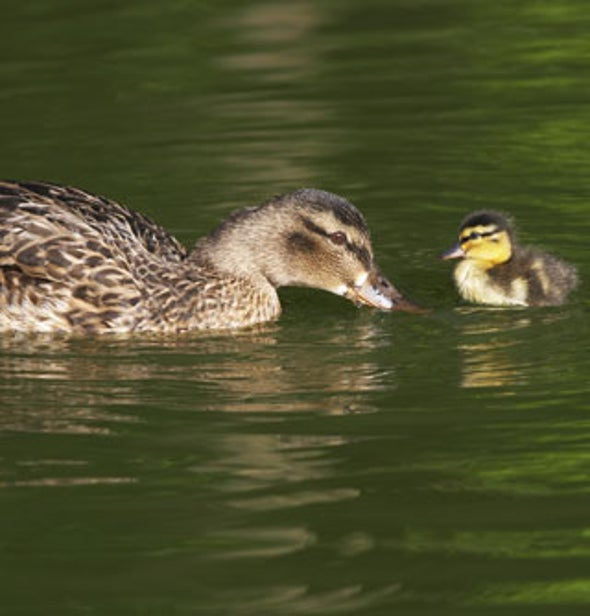 """Newborns Can Bond to a """"Mother"""" from a Different Species"""