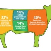 Prime Cuts: How Beef Production Leads to Greenhouse Gases