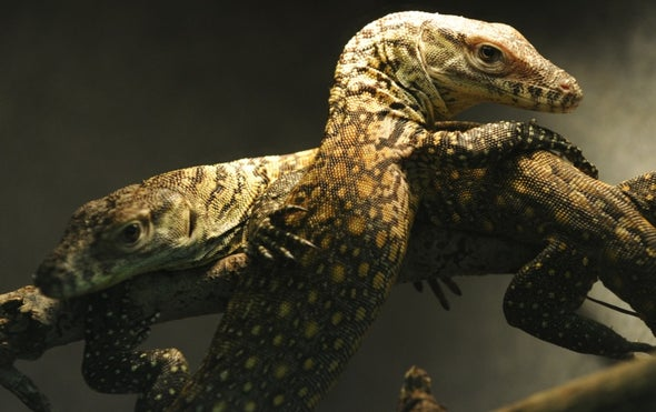 "Strange but True: Komodo Dragons Show that ""Virgin Births"" Are Possible"