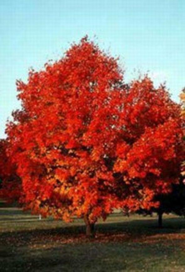 The Warm Hues of Fall Foliage