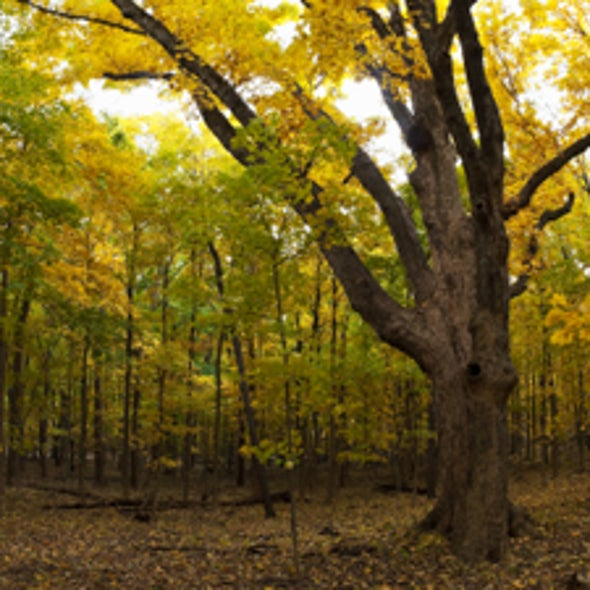 Slash and Sprawl: U.S. Eastern Forests Resume Decline