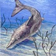 Ancient Marine Reptiles Had Familiar Gear