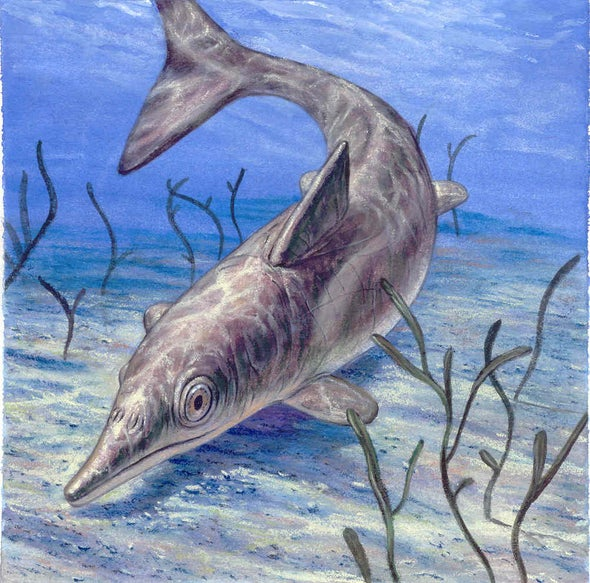 Ancient Marine Reptiles Had Familiar Gear