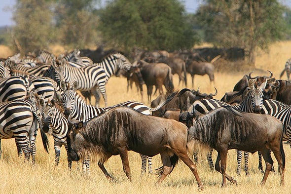 Epic Animal Migrations Could Change with Global Warming
