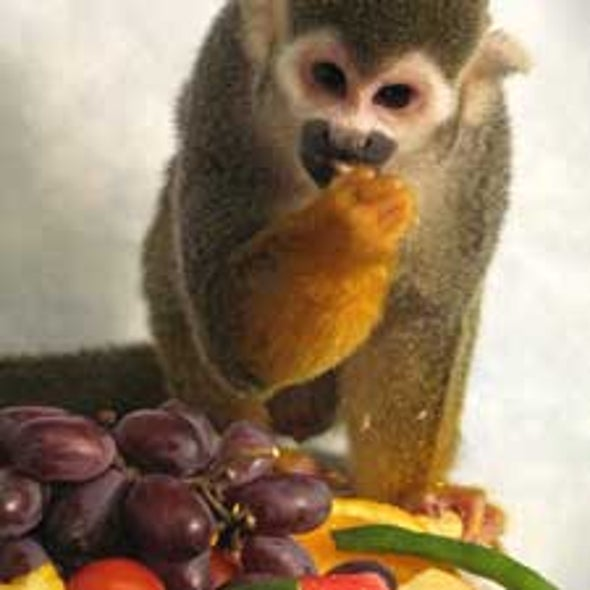 Loci Color: Gene Therapy Cures Color-Blindness in Adult Monkeys