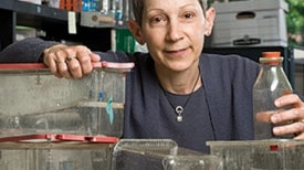 Just How Harmful Are Bisphenol A Plastics?