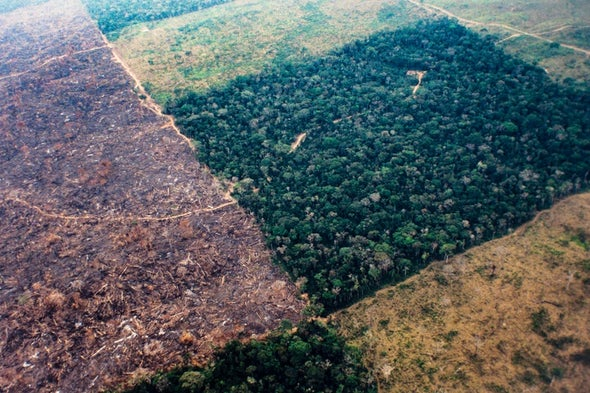 Business as Usual Threatens Thousands of Amazon Tree Species
