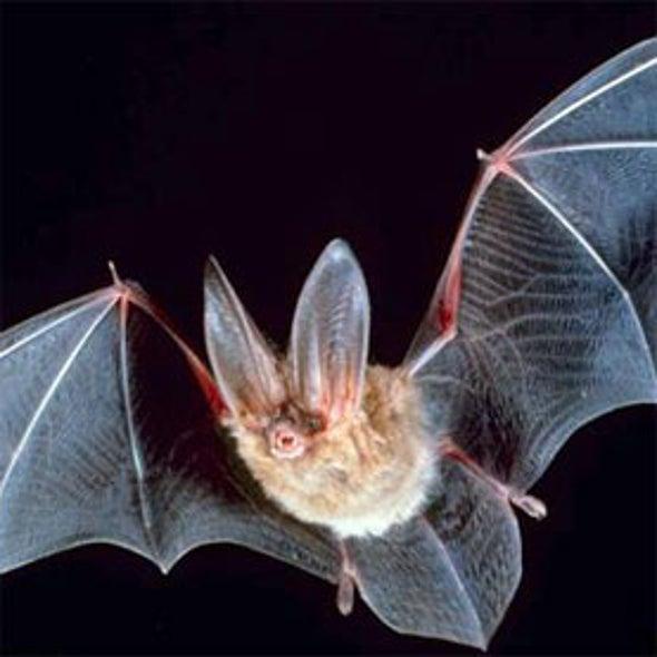 Bat Detective