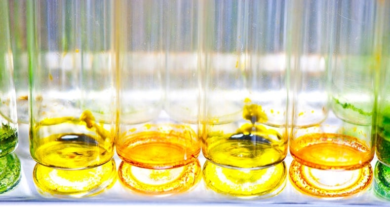 Yellow Light Grows the Best Algae for Biofuels