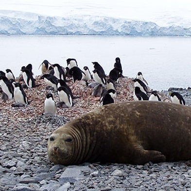 Life at the Poles: Eight Polar Animals That Face the Promise and Peril of Climate Change