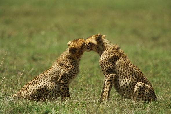 tinder for cheetahs and an unusual blindness scientific american