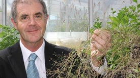 Turning Plants into Drug Factories