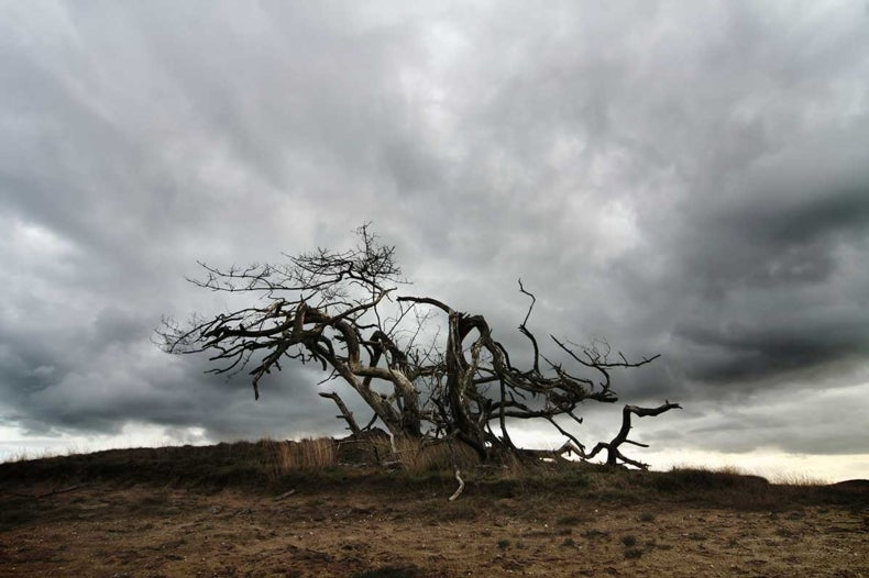Higher Temperatures May Doom Many Trees